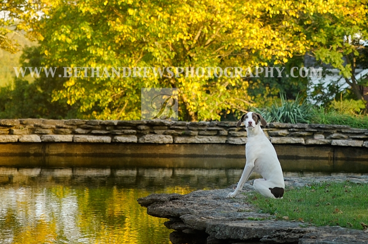 Dog in Kentucky- Photography